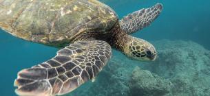 16 червня — Всесвітній день морських черепах: кілька фактів, про які ви не знали