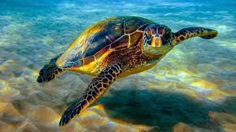 16 июня — Всемирный день морских черепах: несколько фактов, о которых вы не знали