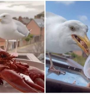 Британець приручає чайку делікатесами: реаліті-шоу веде в TikTok