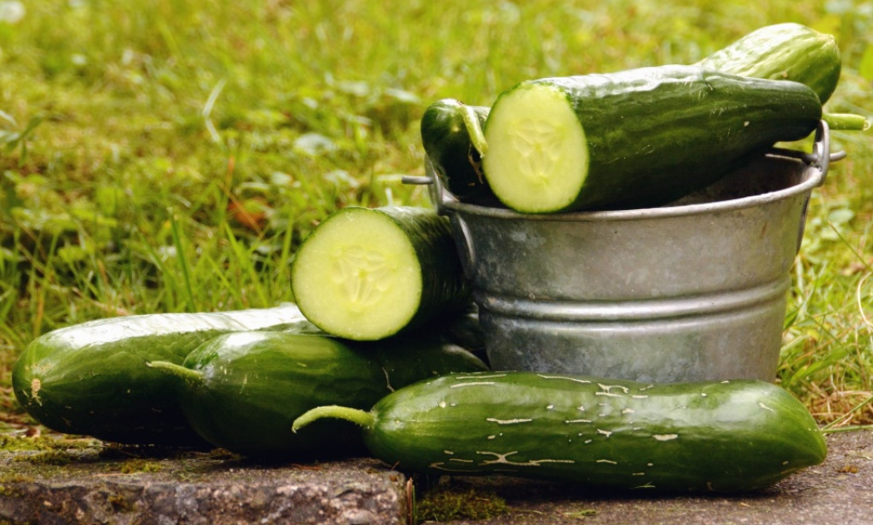 День фермера 5 летних лайфхаков для вашей грядки