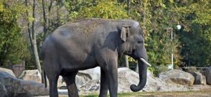 Фото із сайту Київського зоопарку