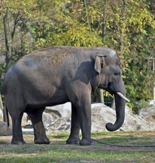 Фото з сайту Київського зоопарку