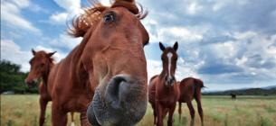 На українському курорті шкуродери-заробітчани розфарбували коня у зебру