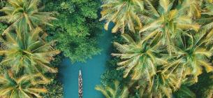 Приблизно 1/4 натуральних ліків приготовлені з того, що росте у тропіках. Сьогодні Міжнародний день тропіків