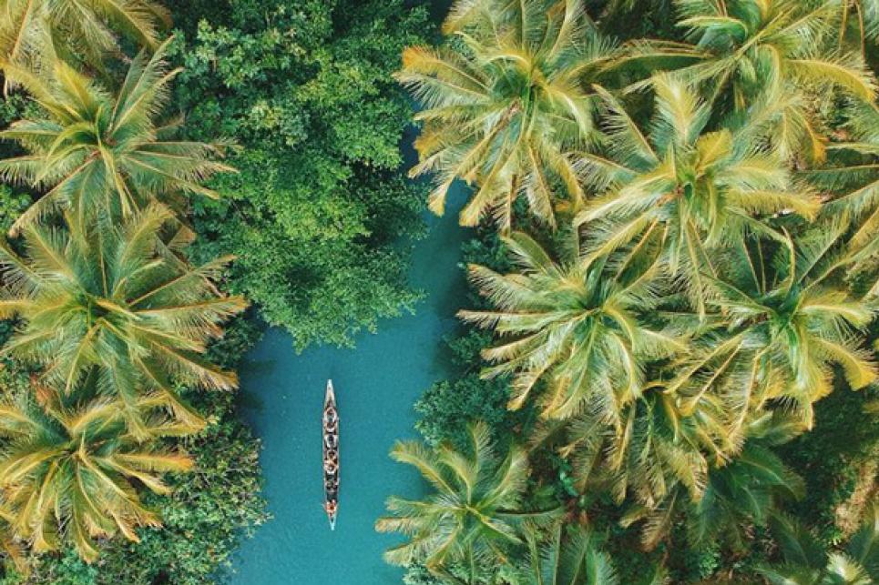 Около 1/4 натуральных лекарств приготовлены из того, что растет в тропиках. Сегодня Международный день тропиков