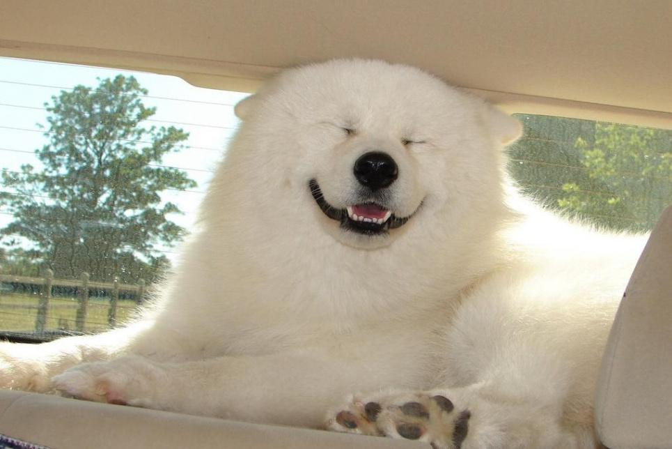 Сегодня Всемирный день собак: почему породы «питбуль» нет и какие собаки самые выносливые