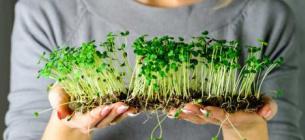 Секрет довголіття знайшли в зелені, яку можна виростити вдома
