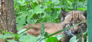 Фото: Київський зоологічний парк