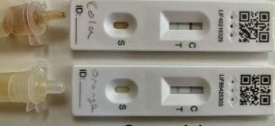 Школярі винайшли спосіб фальшувати тести на COVID і прогулювати уроки