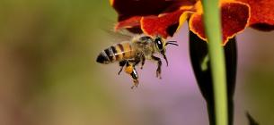 Як зробити так, щоб бджоли не кусали: поради пасічниці