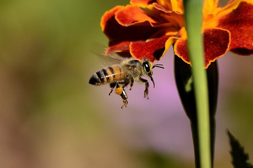 Как сделать так, чтобы пчелы не кусали: советы пасечницы