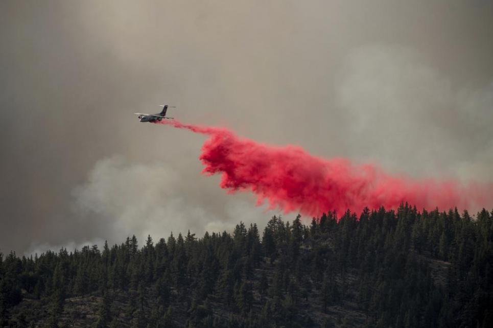 Лесные пожары добрались и до Беларуси