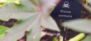 В Британии нашли самый ядовитый в мире сад, полный опасных растений