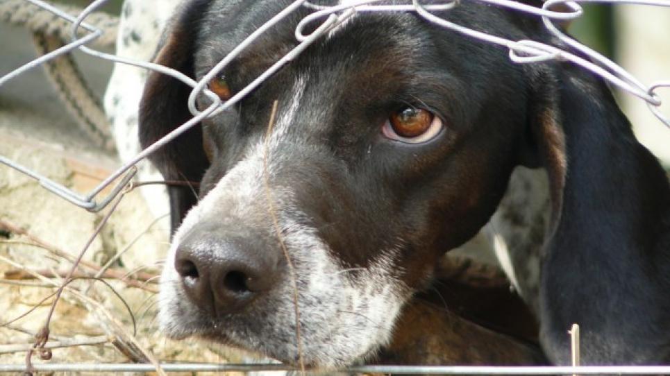 Рада посилила відповідальність за шкуродерство тварин та прийняла низку екологічних законів