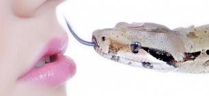 Як упізнати отруйну змію