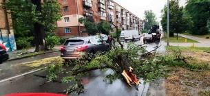 В Україні знеструмлено 75 населенних пунктів, у столиці негода влаштувала деревопад