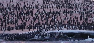 Фото: Національний антарктичний науковий центр