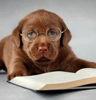Вчені назвали найрозумнішу породу собак