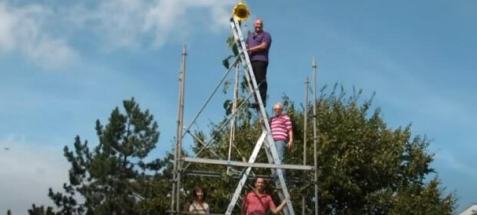 Рекорды садоводства: мужчина вырастил подсолнух высотой в двухэтажное здание