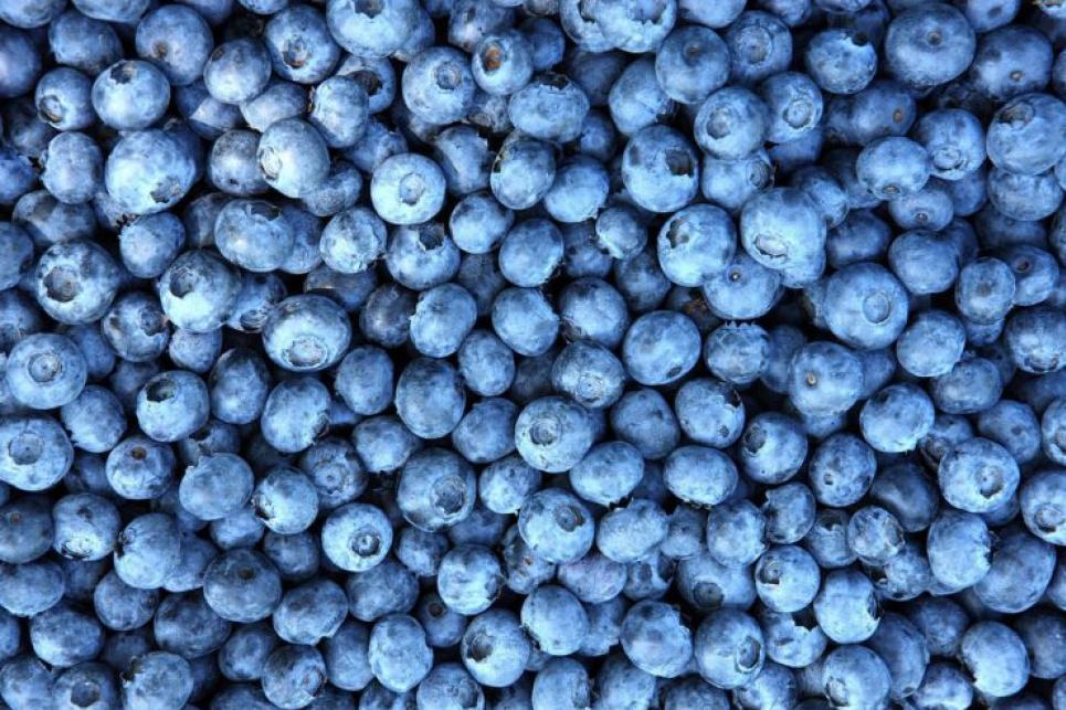 Названа ягода, улучшающая работу мозга