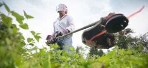 Эколог рассказал, что нужно сделать, чтобы сорняки ушли навсегда