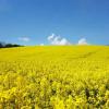 Фото: Агробізнес сьогодні