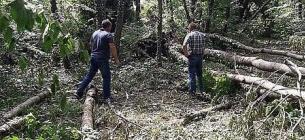 Фото: Хмельницкого областного управления лесного и охотничьего хозяйства