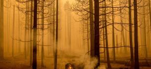 Американський професор підпалював ліси