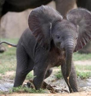 Всемирный день слонов: что мы с ними делаем