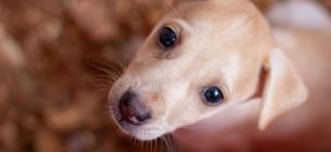 Взять животное из приюта домой: 6 причин, почему это стоит сделать