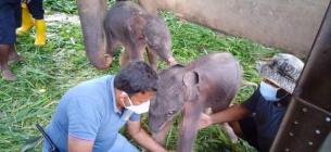 Фото: Elephant Lovers Travels, Facebook