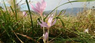 Фото: Ужанський національний парк
