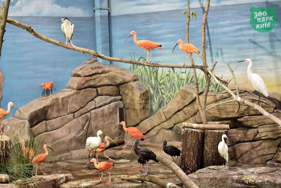 Фото: Київський зоологічний парк загальнодержавного значення